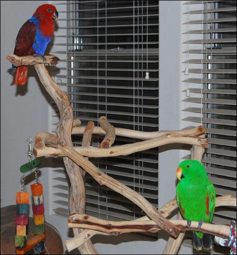 Pixie & Paulie